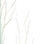 Обои коллекции Crush Noble Walls, арт. 63352